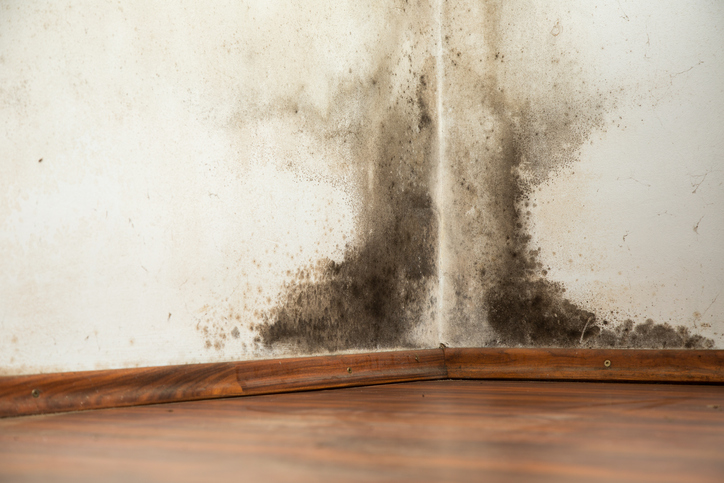 Prevent mold Growth After Flooding | Cleaning Surfside